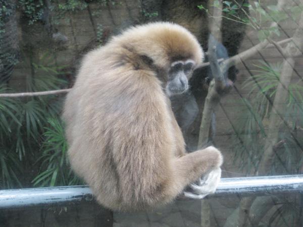 動物園日和~♪
